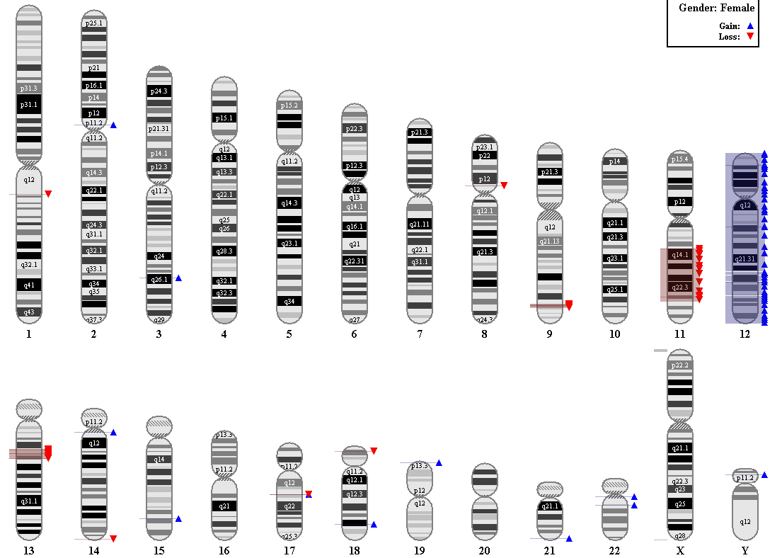 Virtual karyotype karyogram